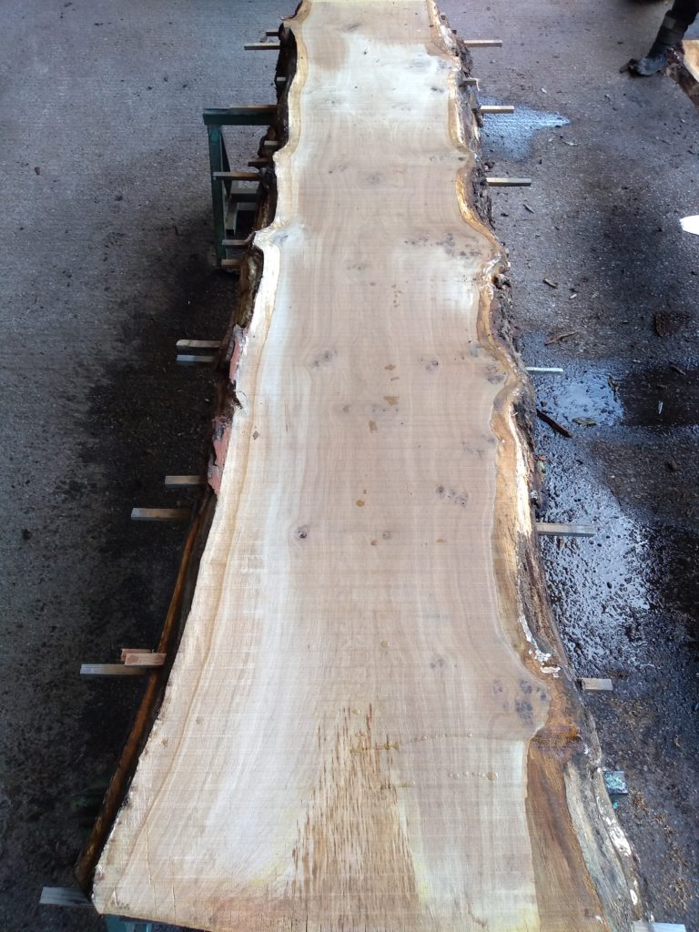 English Pippy Oak Log 00794 Fresh Sawn