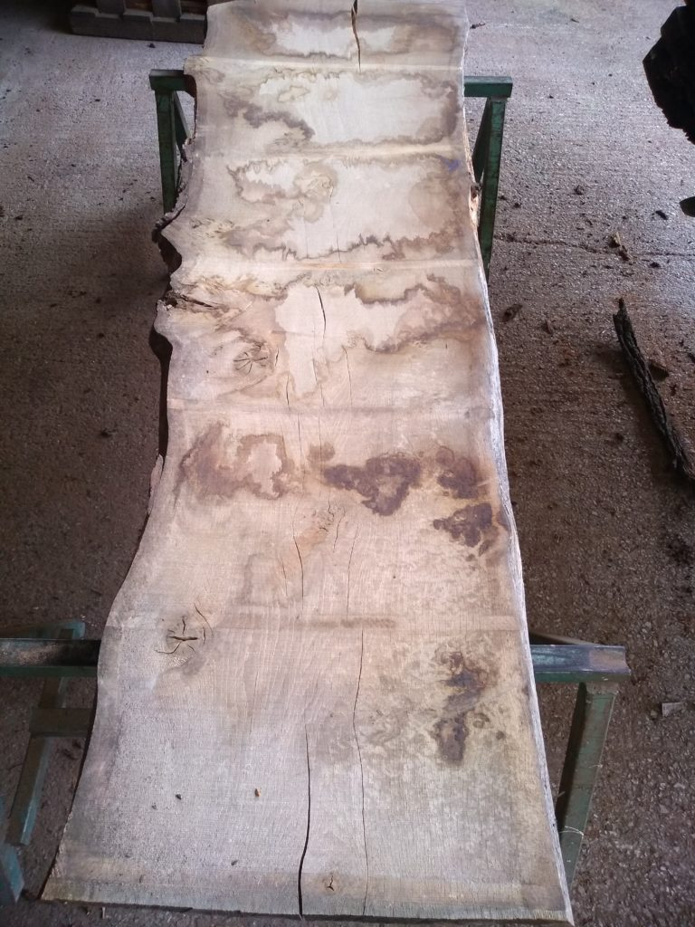 English Pippy Oak 00970 Log