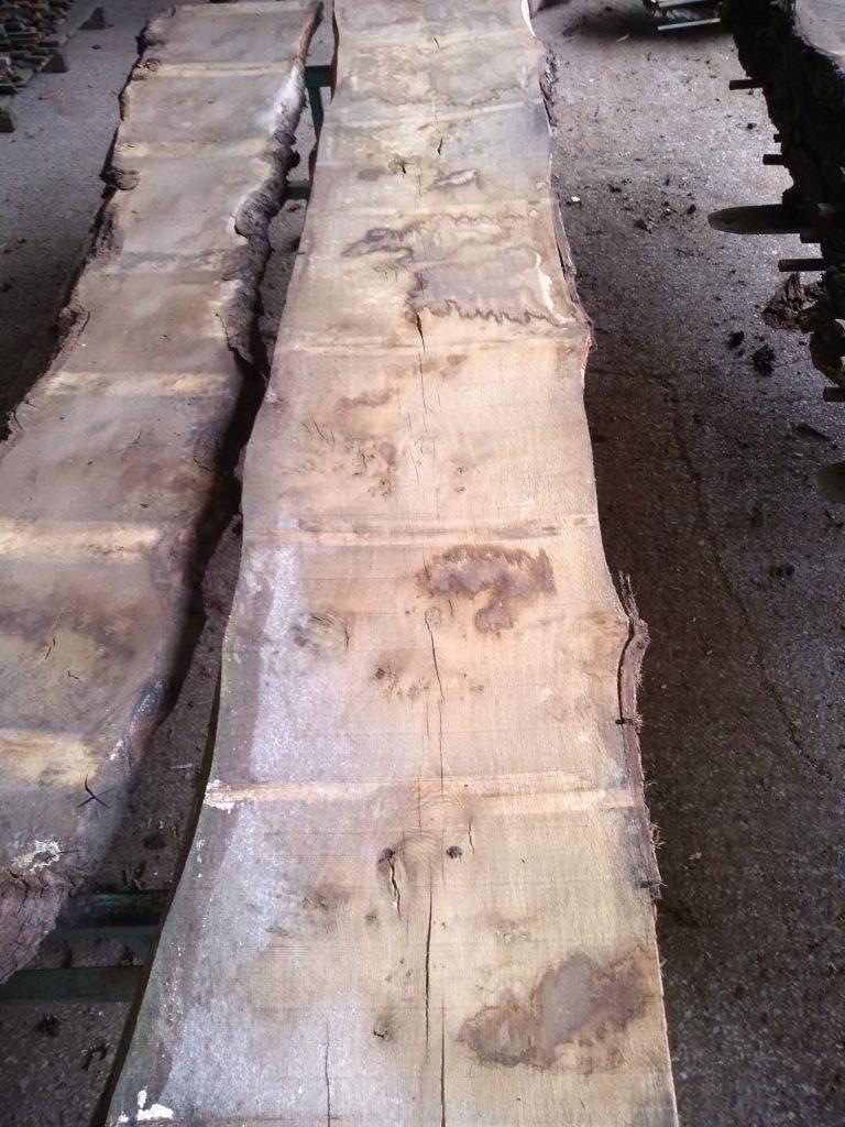 English Pippy Oak Log 00989