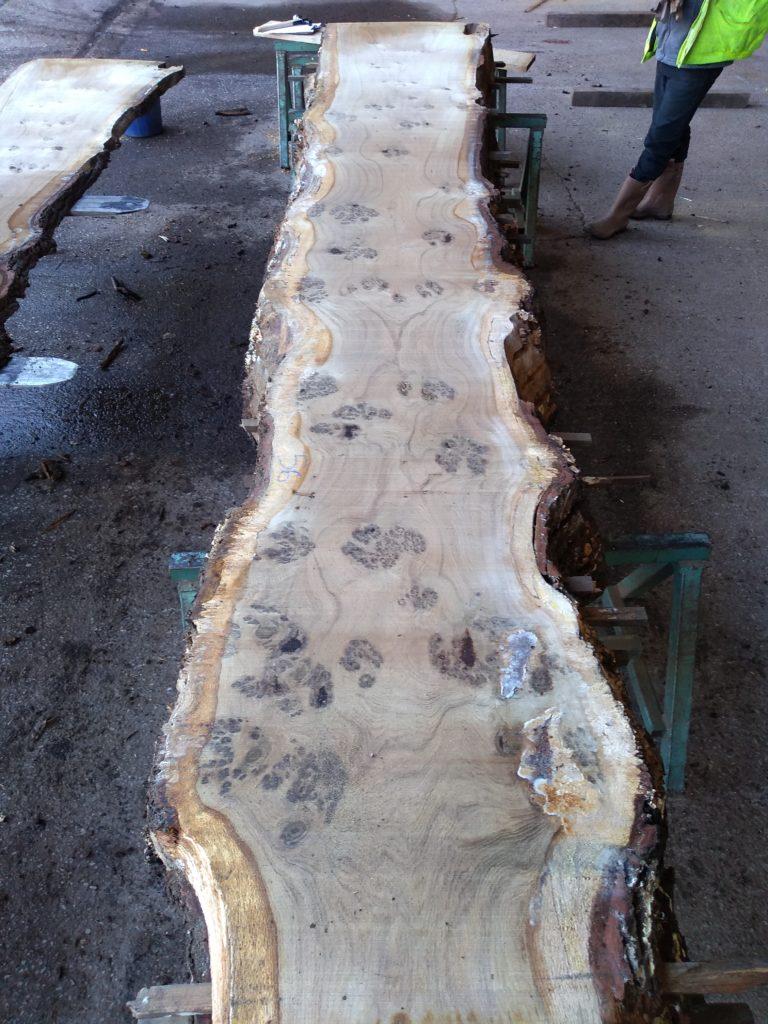 English Heavy Pippy Oak Log 00797 Fresh Sawn