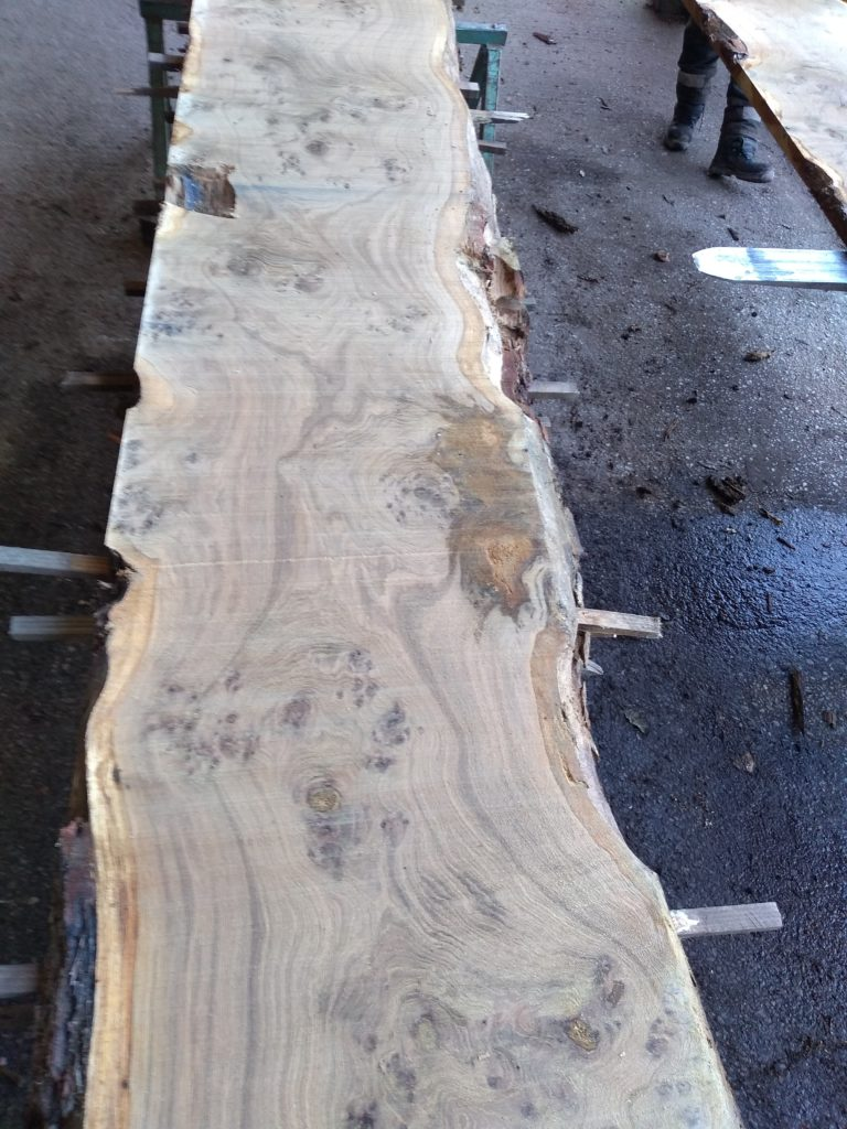 English Heavy Pippy Oak Log 00798 Fresh Sawn
