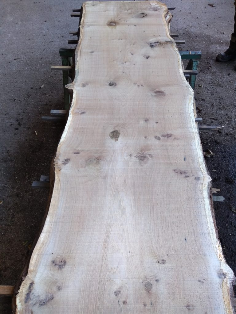 English Pippy Oak Log 00799 Fresh Sawn
