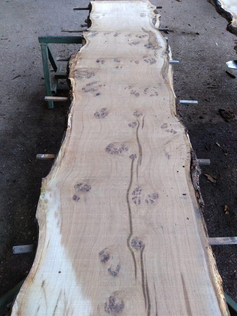 English Heavy Pippy Oak Log 00321 Fresh Sawn