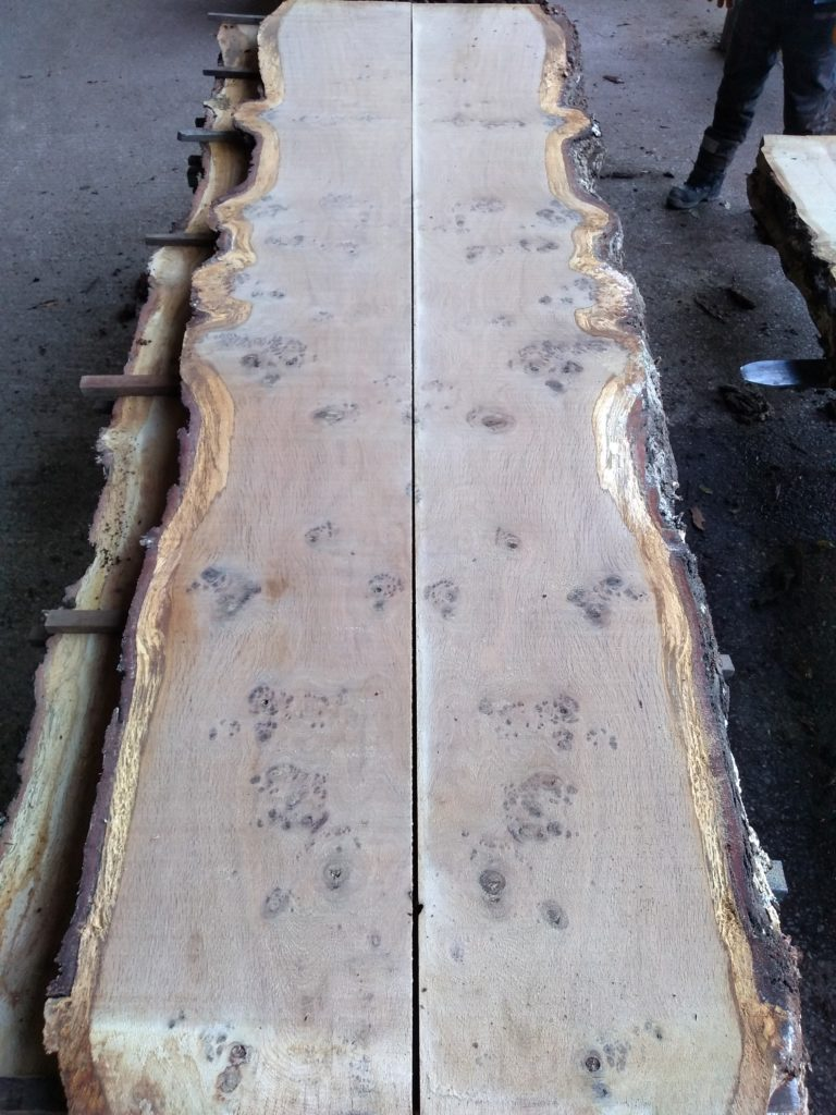 English Medium Pippy Oak Log 00322 Fresh Sawn