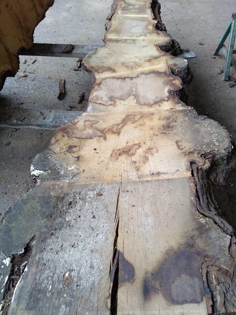 English Pippy Oak Log 00330