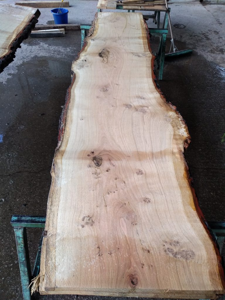 English Pippy Oak Log 00997 Fresh Sawn
