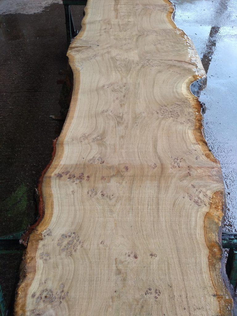 English Pippy Oak Log 998 Fresh Sawn