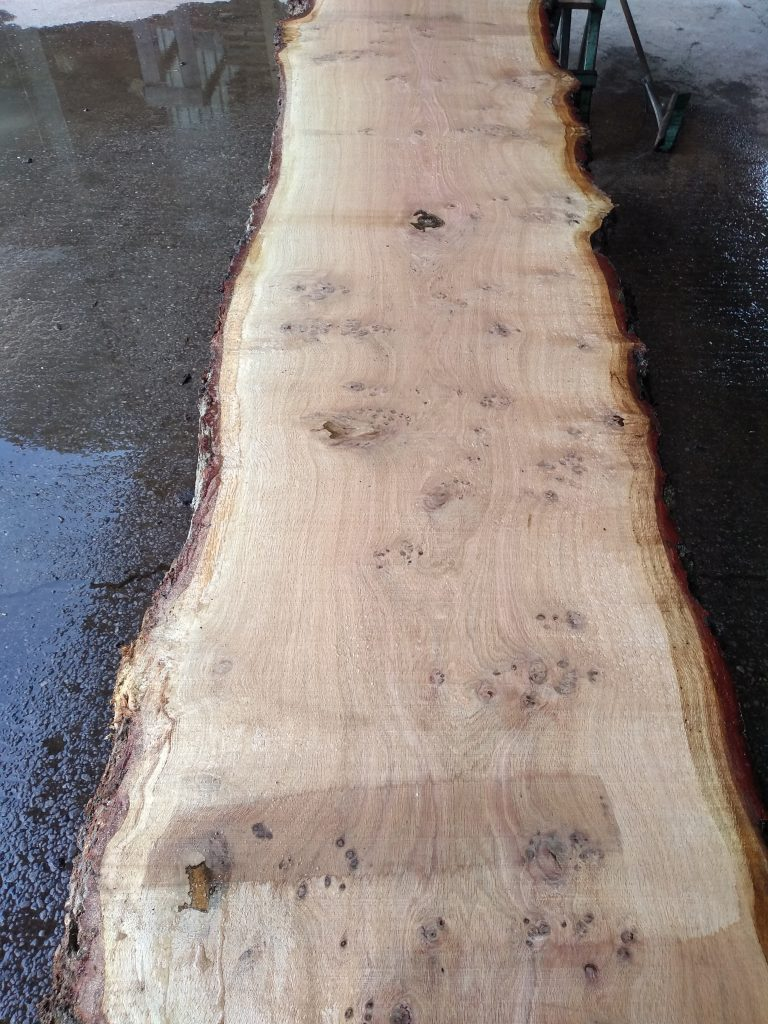 English Pippy Oak Log 00999 Fresh Sawn