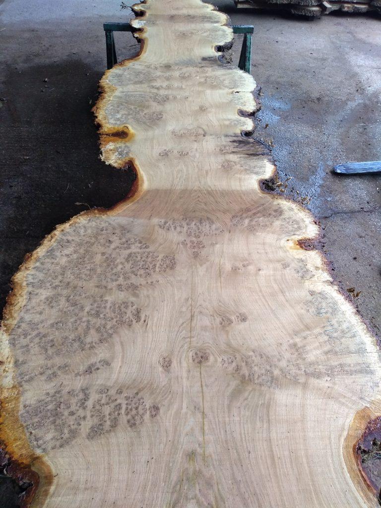 English Burr Oak Log 00023 Fresh Sawn