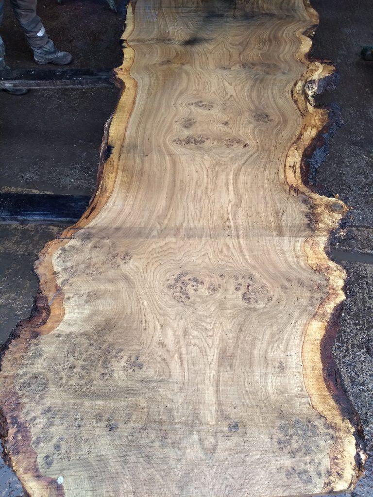 English Heavy Pippy Oak Log 00029 Fresh Sawn