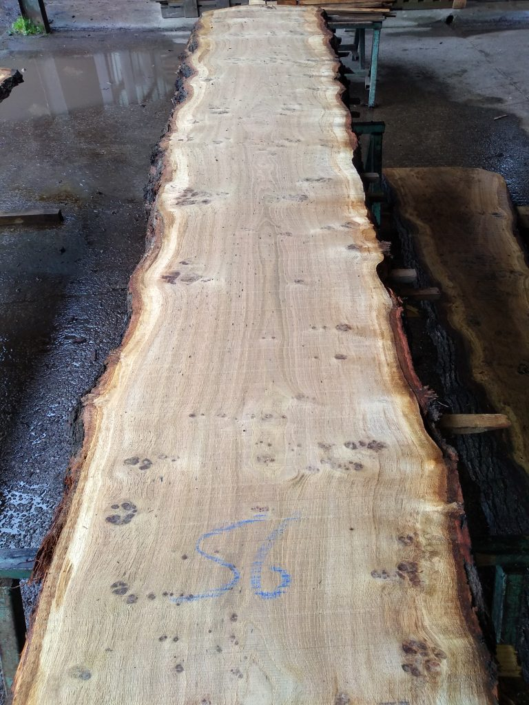 English Pippy Oak Log 09778 Fresh Sawn