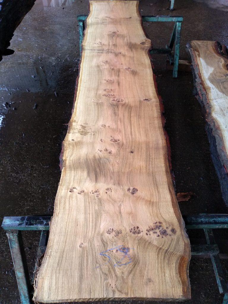 English Pippy Oak Log 00032 Fresh Sawn