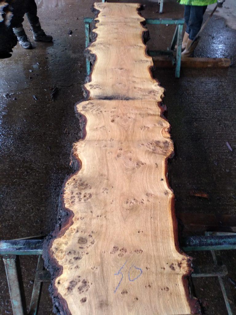 English Pippy Oak Log 00034 Fresh Sawn
