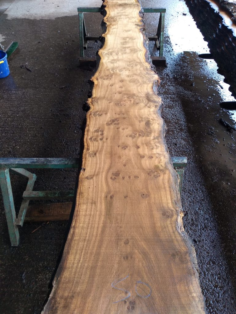 English Pippy Oak Log 40647 Fresh Sawn