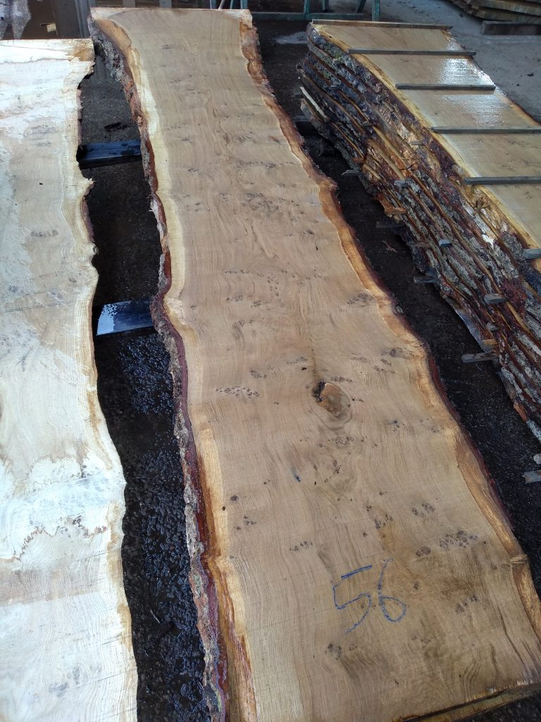 English Pippy Oak Log 4981 Fresh Sawn