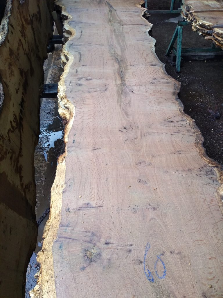 English Pippy Oak Log 01266 Fresh Sawn