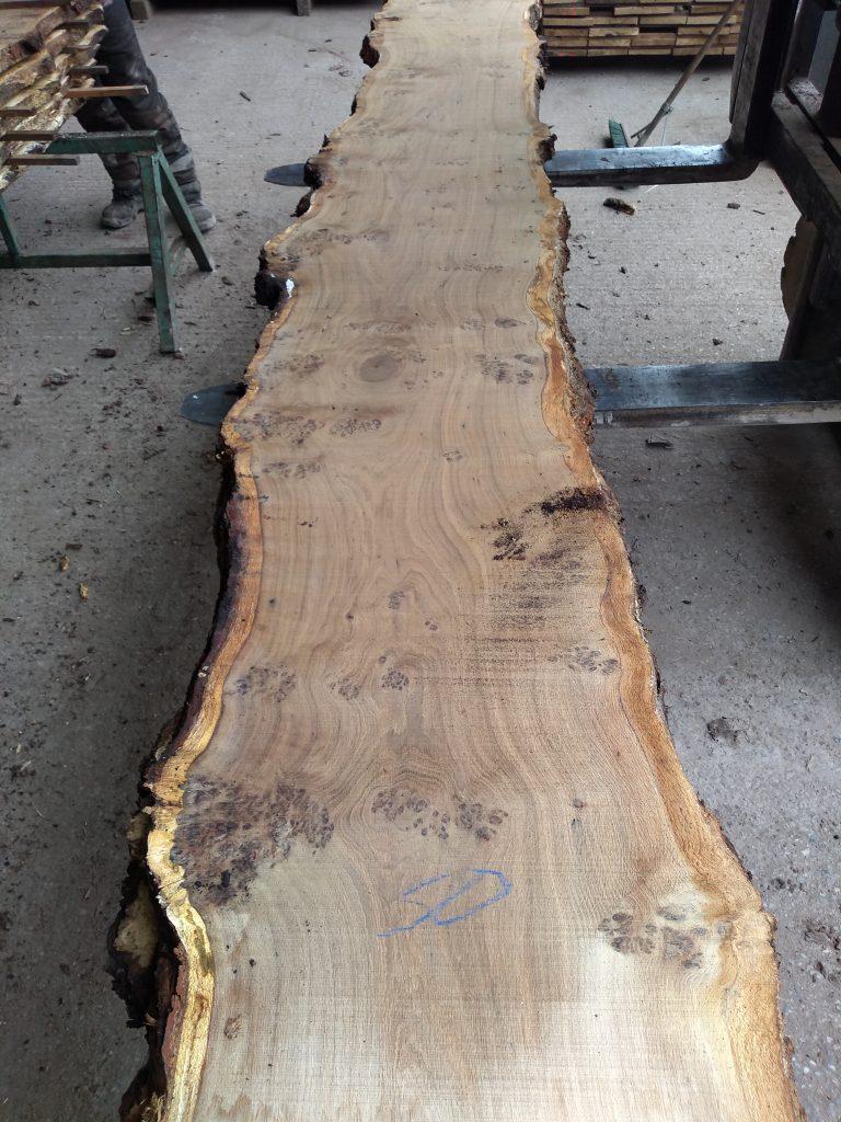 English Pippy Oak Log 03018 Fresh Sawn