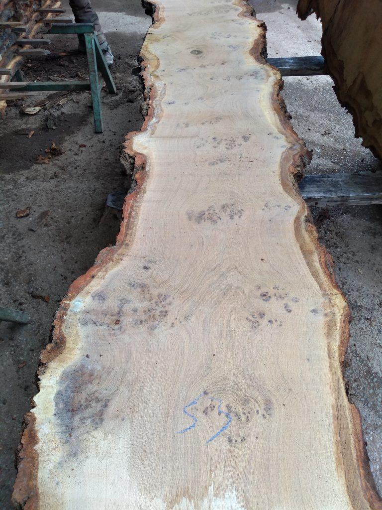 English Pippy Oak Log 3021 Fresh Sawn